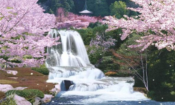 Sagura-japan-cherry-blossom-moving-waterfall1